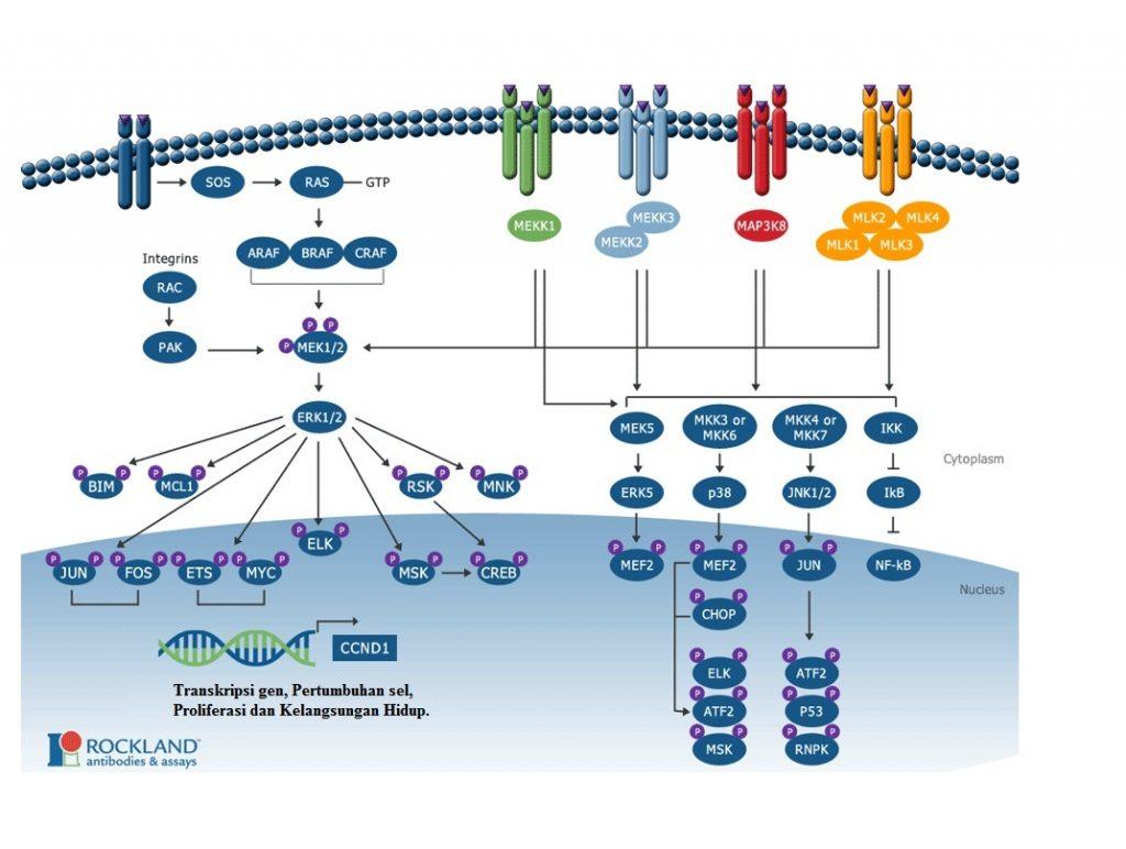 Evolusi kanker dan transkripsi gen, sel, dan kelangsungan hidup